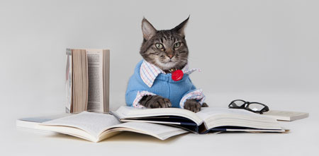 Fun image of cat attempting to read written English